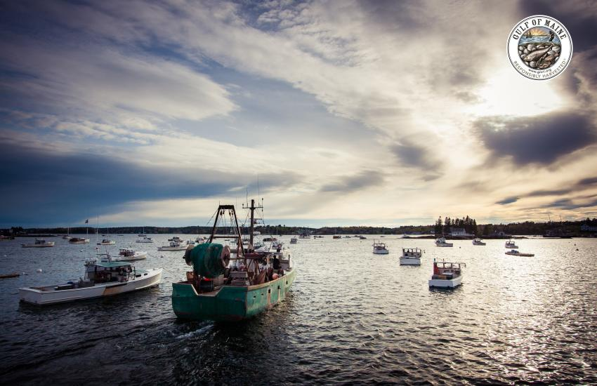 Case Study: Gulf of Maine Research Institute's Sustainable Seafood Program